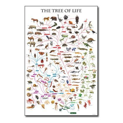 printable montessori timeline of life tree of life chart cladistics