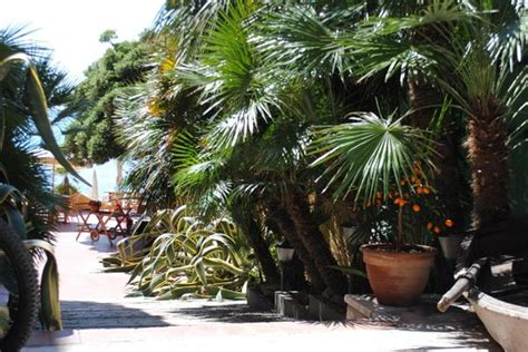 hotel giardino finale ligure giardino con palme foto di varigotti finale ligure