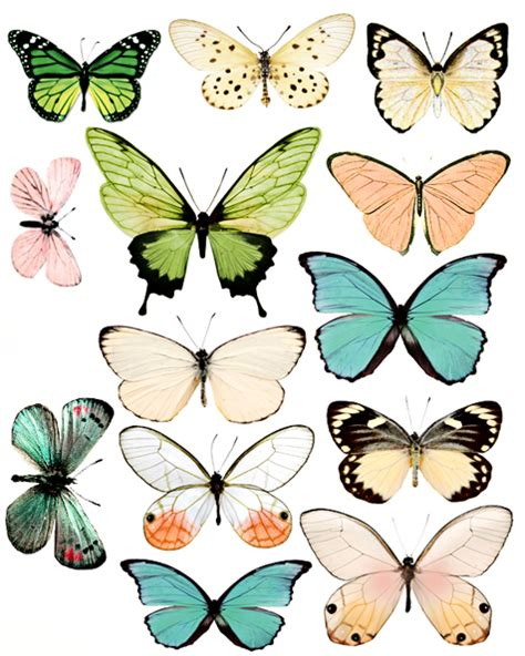 Printable Images Butterflies | free butterflies pictures clipart best