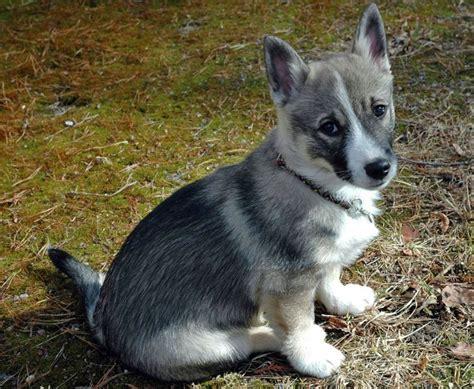 rare dog breeds puppies rare super cute dog breeds petbreeds dogs 2