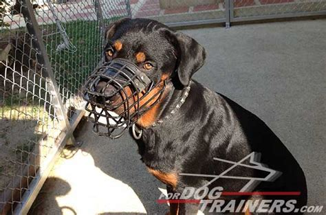 cage for rottweiler rottweiler wire muzzle for winter with rubber cover m10 1073 wire muzzle 43