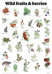 flowers and fruits from the wilderness or thirty six years in and two winters in honduras classic reprint books fruits berries guardian wallchart prints