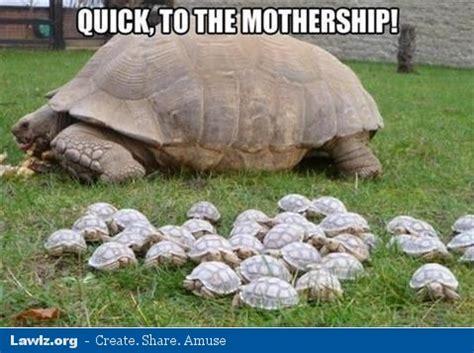 Tortoise Meme - fateful battle of the fd s page 2