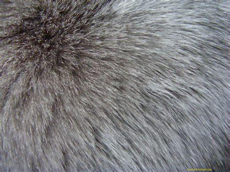 skin texture fur wolf fur texture background background