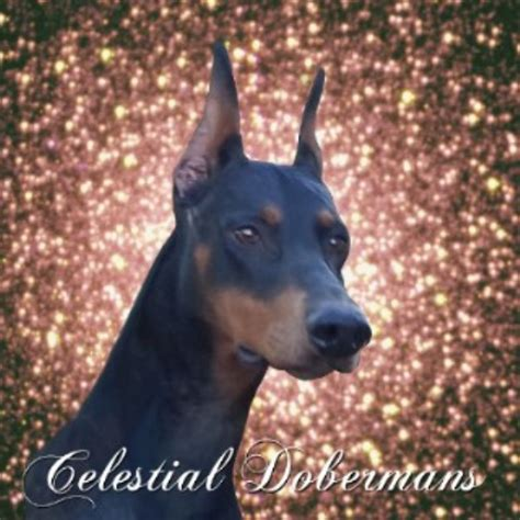 doberman puppies ohio doberman pinscher breeders in ohio freedoglistings