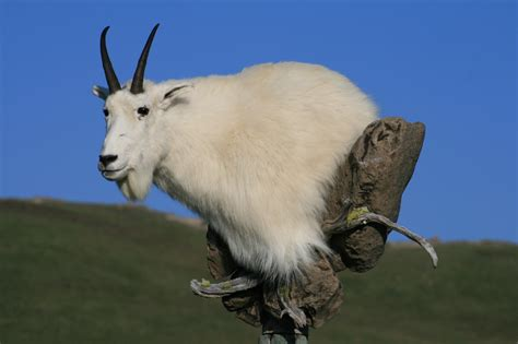 Rugs by Mountain Goat