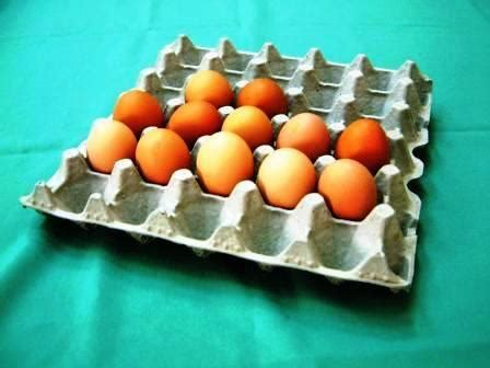 How To Make Egg Trays From Recycled Paper - recycled paper pulp egg egg tray box cup tray