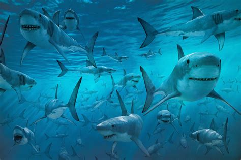 images of sharks free shark wallpapers wallpaper cave