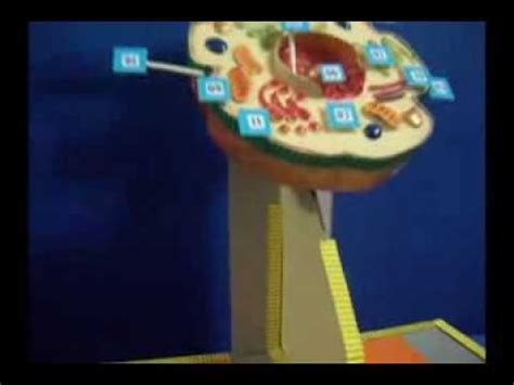 celula animal maqueta escolar youtube como hacer una celulas con plasticina imagui