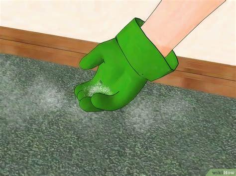 come eliminare le pulci da casa come eliminare le pulci in modo naturale 17 passaggi
