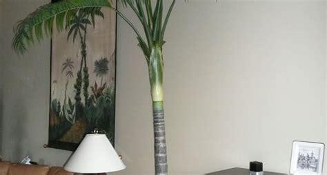 alberi da interni fiori e piante dalla a alla z piante appartamento