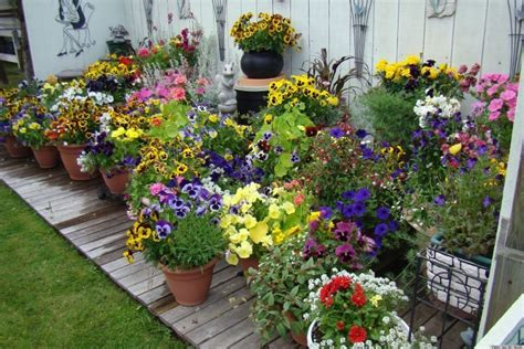 pretty container gardens   perfect   home
