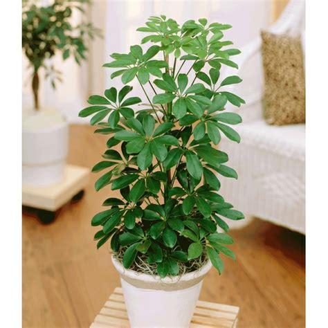 zimmerpflanzen schlafzimmer zimmerpflanzen schlafzimmer ungesund gt jevelry
