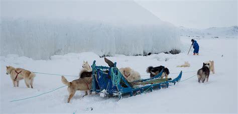 Sled Background Check Arctic Dogsledding Culture Is Slipping Through The Cracks Hakai Magazine