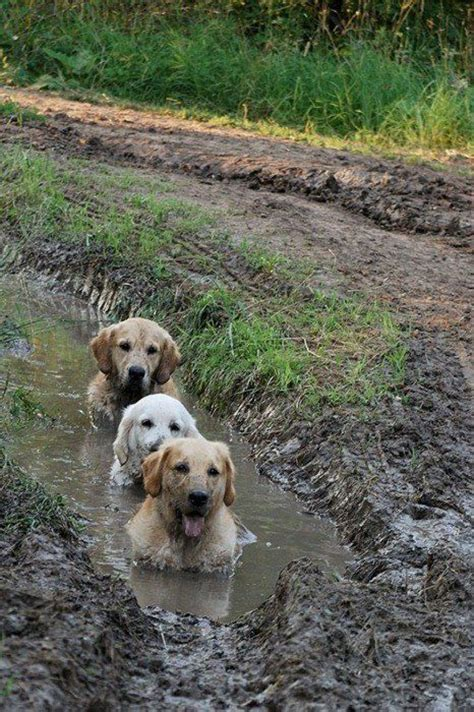 muddy puppy muddy dogs rumble
