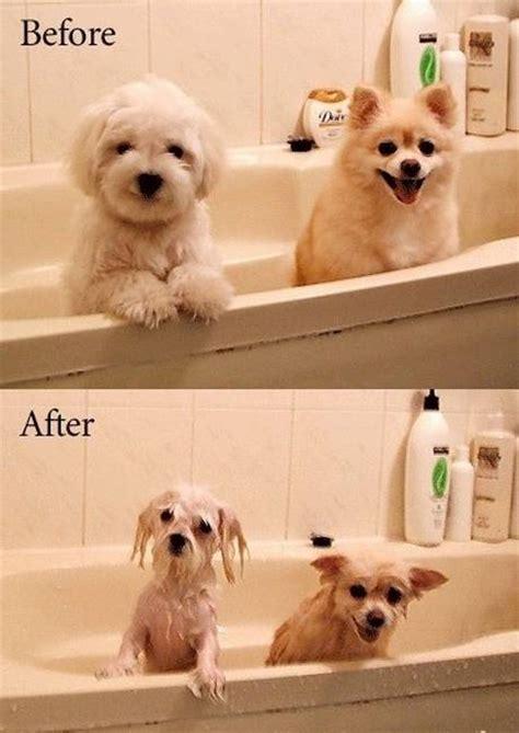 bathtub dogs i hate when this happens gigi pinterest
