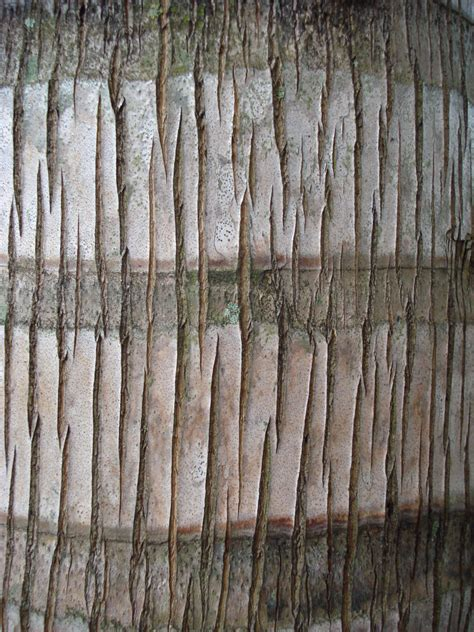 palm woodwork texture14 palm tree wood by freetextures on deviantart