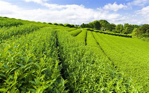The Tea Garden by The World Outside The Tea Gardens Beautiful Scenery