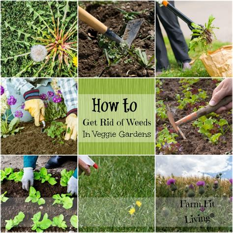 vegetable how to keep weeds out of a