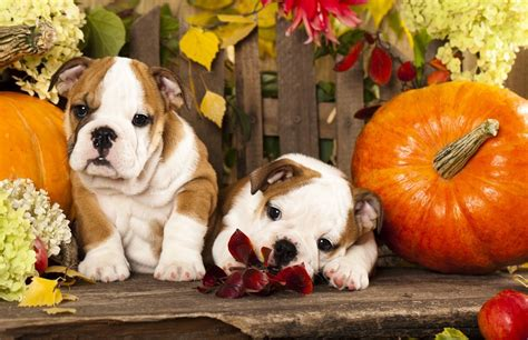 fall puppies animals who fall margaritaville