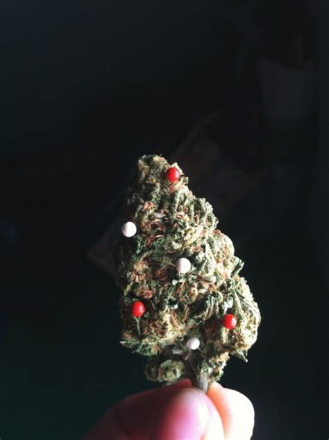 christmas tree weed tumblr