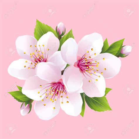 resultado de imagen para flor del cerezo dibujo pintura