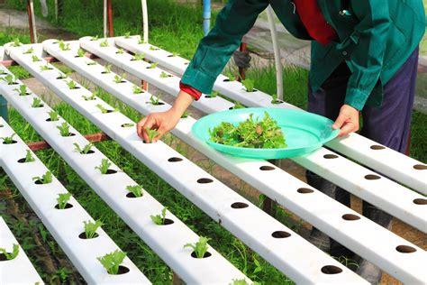Aquaponic Starter Kit Malaysia cultivos hidrop 243 nicos una tecnolog 237 a verde que alimenta