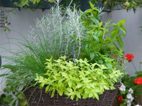 hanging herbs 8 balcony herb garden ideas you would like to try