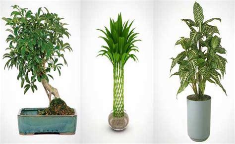 imagenes de plantas verdes de interior 15 plantas de interior perfectas para pisos de ciudad