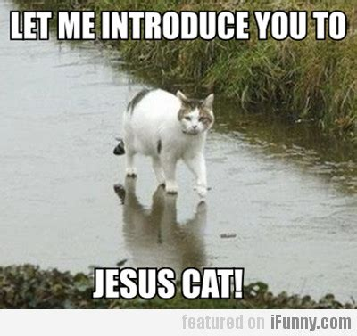 Let Me Introduce You To Sofas by Let Me Introduce You To Jesus Cat Ifunny