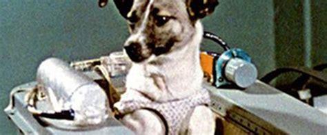 story  laika     dog overland literary journal