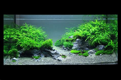 Aquascape Plants For Sale by Aol Image Search Result For Quot Http Www Planted Aquarium