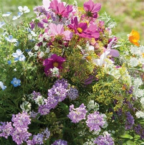 Biji Benih California Poppy Ballerina Mix benih beneficial insect attractant mix flowers 100 biji non retail bibitbunga