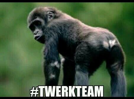 Funny Gorilla Memes - twerkteam gorilla meme funnies d pinterest meme