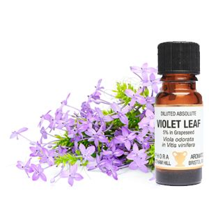 violet leaf abs diluted (5%) 10ml | amphora aromatics