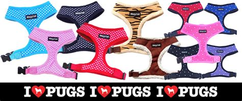 pug collar or harness benefits of a soft harness for your pug i pugs