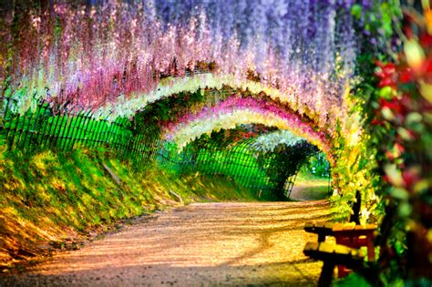 flower tunnel the most magical tree tunnels in the world