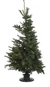 real christmas trees bq b q unveils 50 50 and fir tree daily mail
