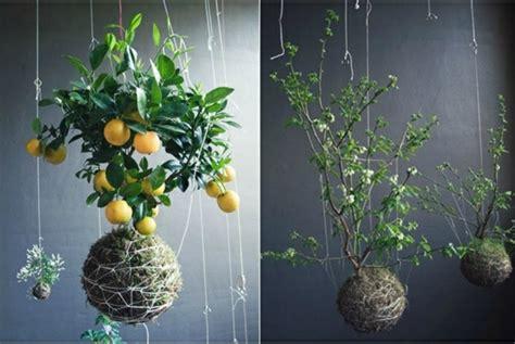 ideen fuer haengende blumentoepfe mit zimmerpflanzen