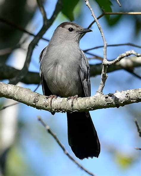 most common backyard birds image gallery most common backyard bird