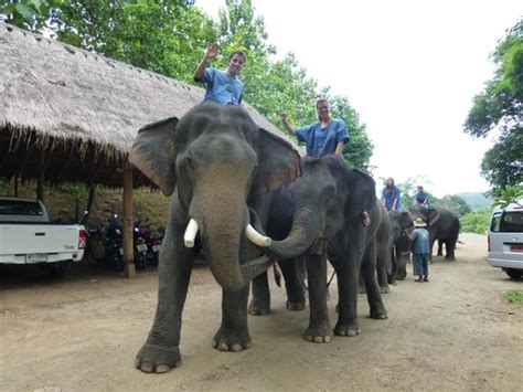 cooling everybody picture of thai elephant home mae