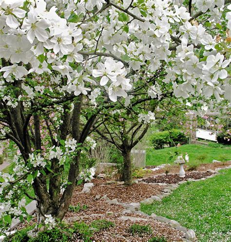 white flower trees flickr photo sharing