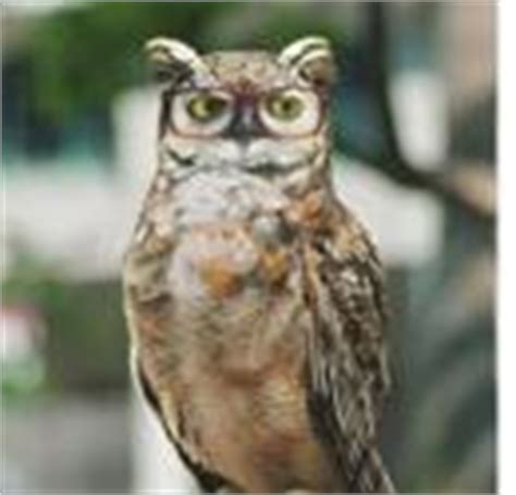 americas best eyeglasses girl with the owl america s best contacts eyeglasses debuts new