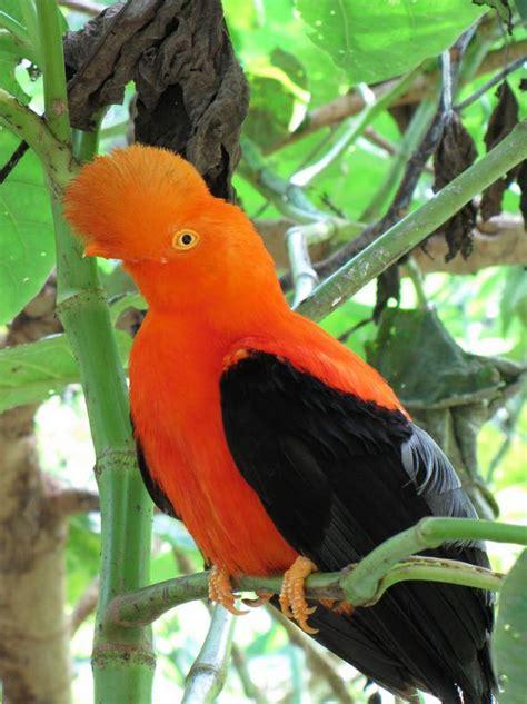 colorful birds photo memorie