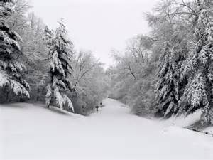 Christmas Scene Wall Murals snowy winter scenes for your good health