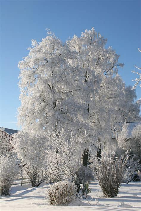winter in white pop 1847381790 winter in white pop up 格安 山形コンフのブログ