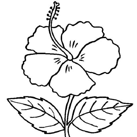 free coloring pages of gumamela flower