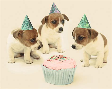 puppy birthday quot vintage puppy birthday card quot by micklyn redbubble