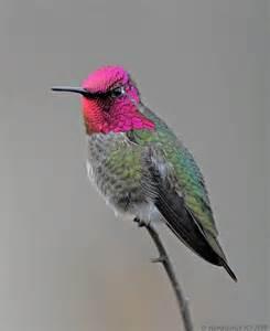 Strange Flowers - 18 strange and beautiful hummingbird species mnn