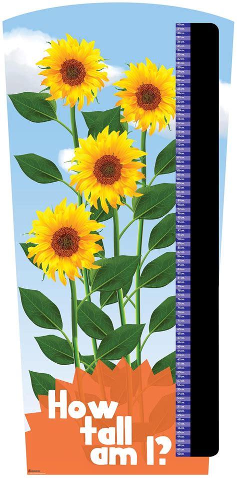 super sunflower height chart